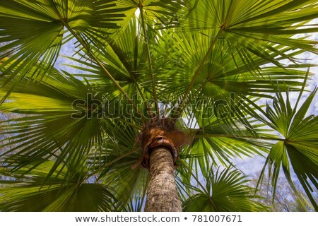 Relaxing Under Palm Trees Tropical