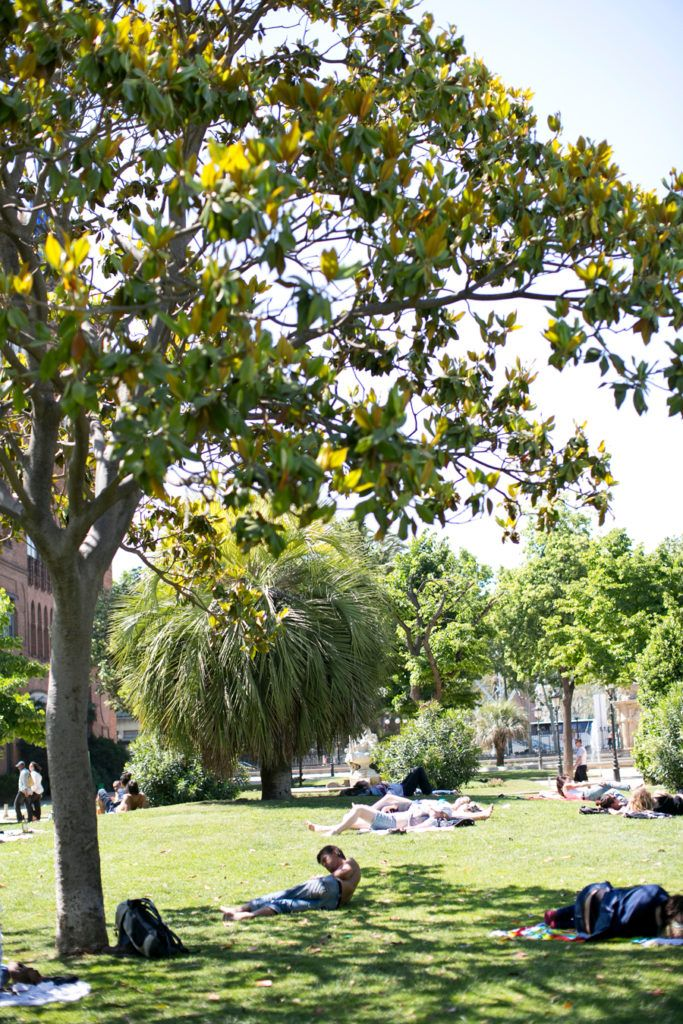 Relaxing Under The Trees In Barcelona Spain