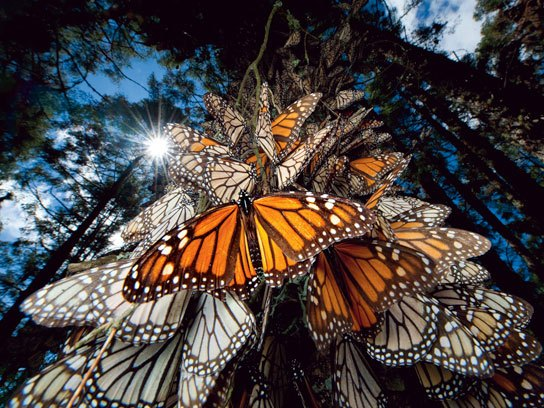 Sublime Nature Monarch Butterflies