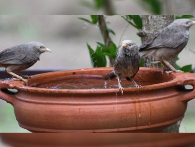 Summer Birds Bathing