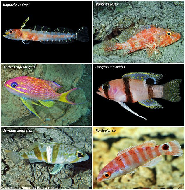 Teeming With New Species