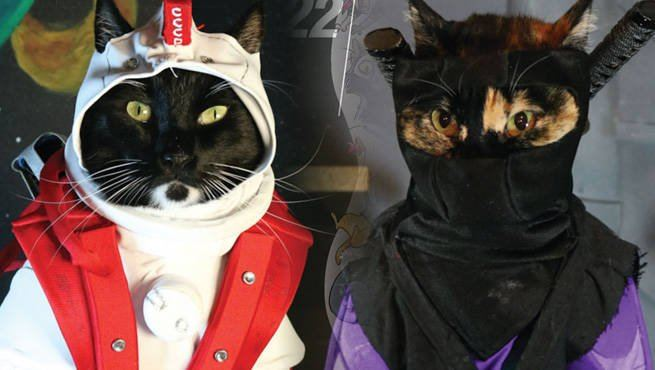 The Adorable Series Of Cat Cosplay