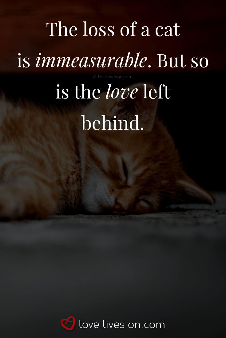 The Loss Of A Cat