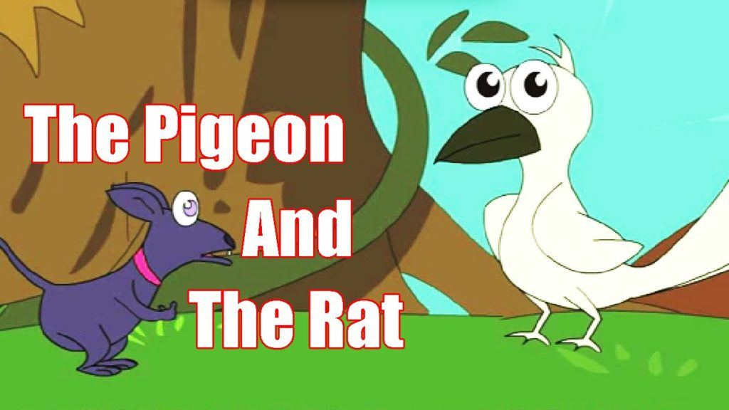 The Pigeon And The Rat