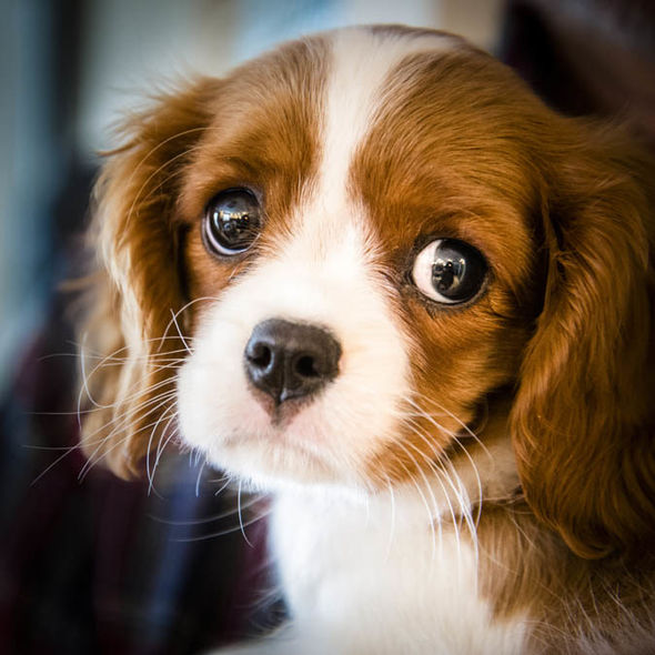 The Science Adorable Puppy