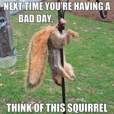 Think Of This Squirrel