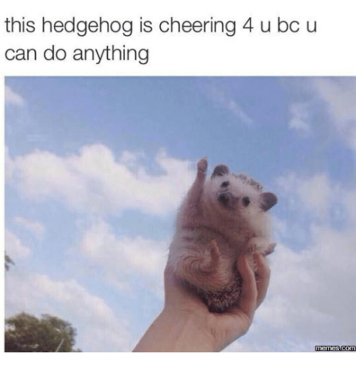 This Hedgehog Is Cheering