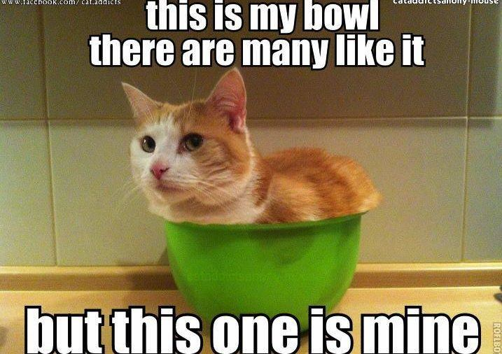 This Is My Bowl