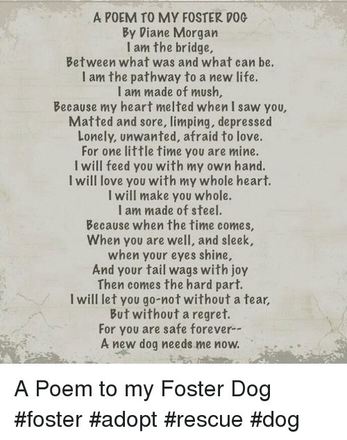 To My Foster Dog