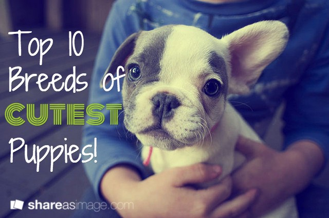 Top 10 Breeds Of Cutest Puppies