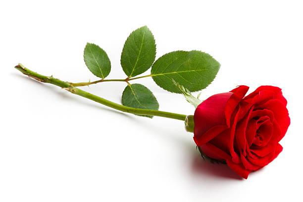 Top Roses