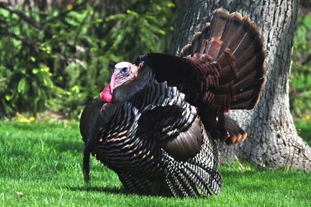 Turkey Look Like