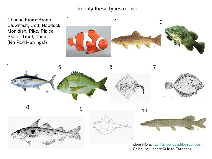 Types Of Fish Picture