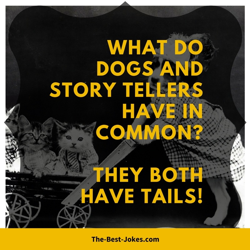 What Do Dogs And Story Tellers