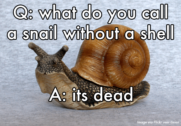 What do you call a snail