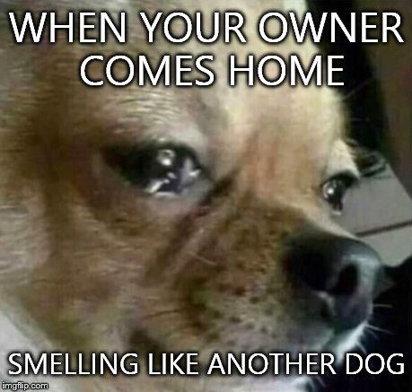 When Your Owner Comes Home