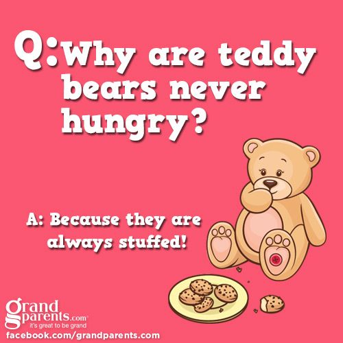 Why Are Teddy Bears Never Hungry