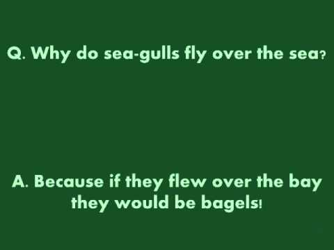 Why Do Sea-gulls Fly