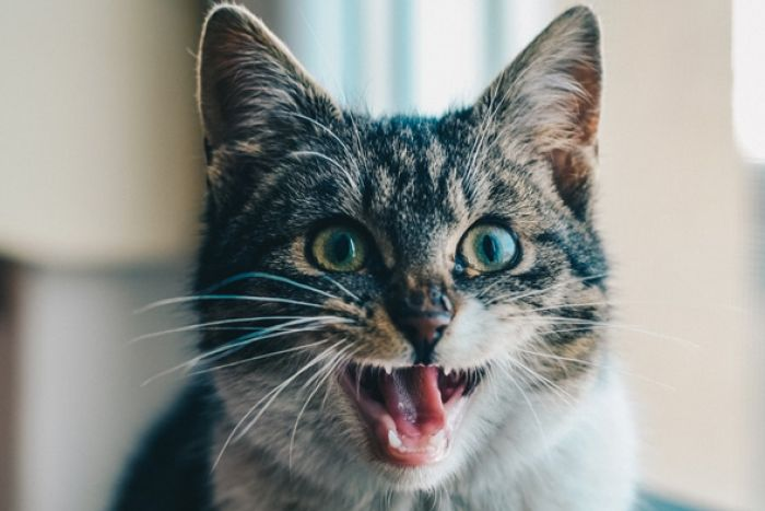 Your Cat May Want To Kill You