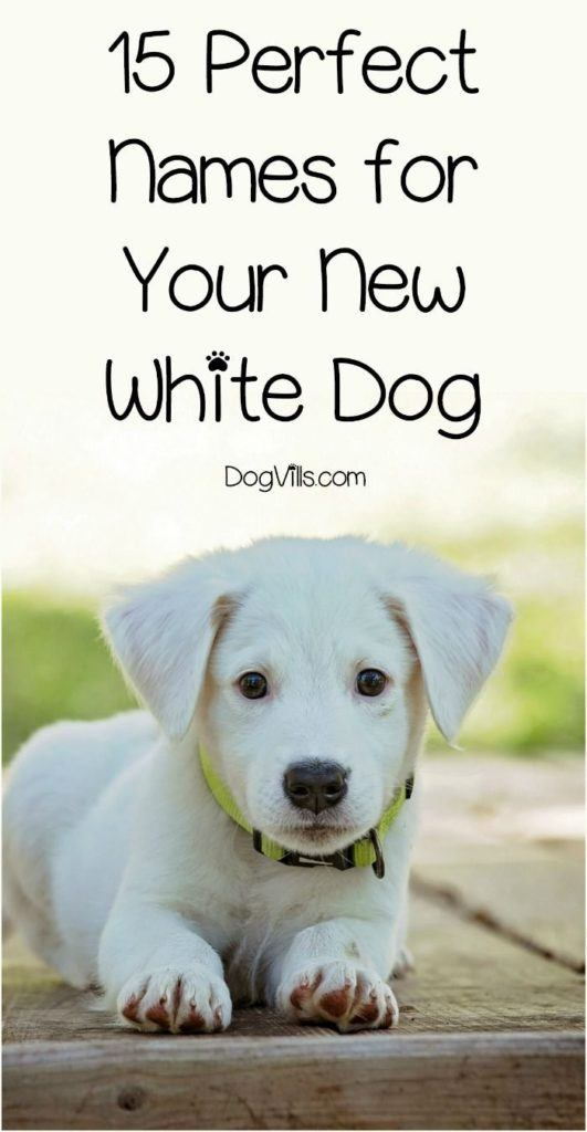 Your New White Dog