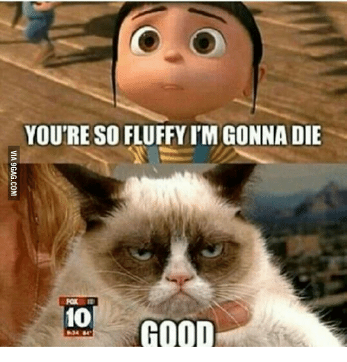 You're So Fluffy