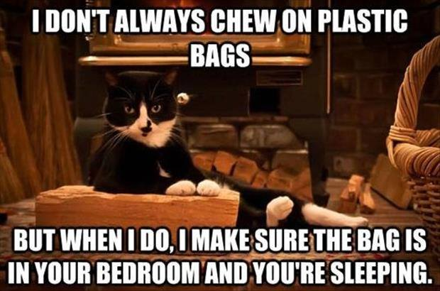 I don't always chew on Plastic bags