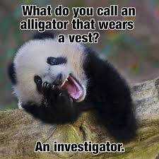 what do you call an alligator