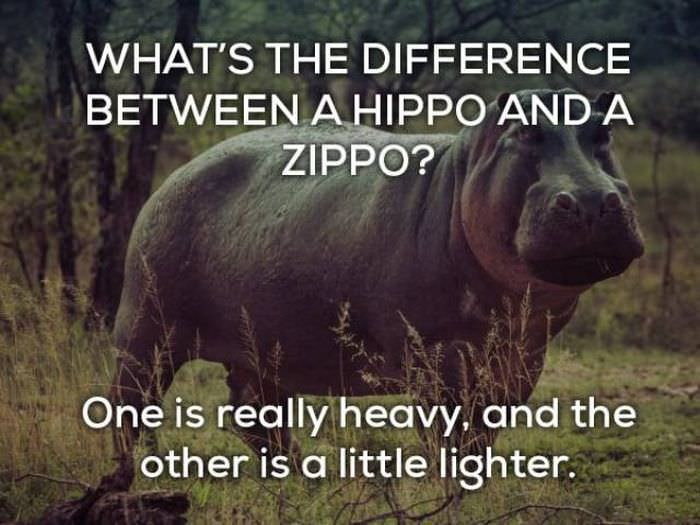 whats the difference between a hippo and a zippo